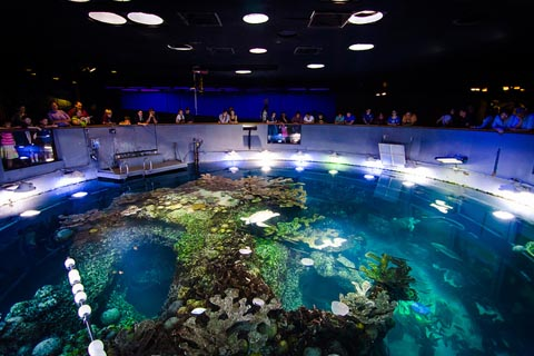 new_england_aquarium