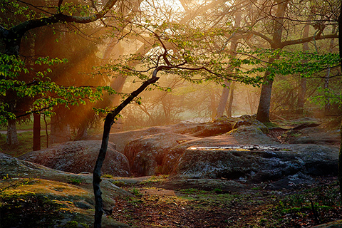 forest_of_fontainebleau
